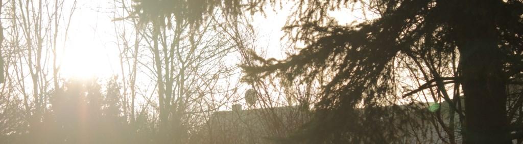 Sonnenaufgang hinterm Baum